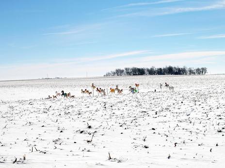 Dave Jordano, Hobby Horses