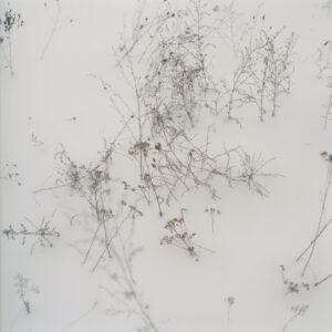 © Anne Schwalbe, Wiese XIX, 2010. C-Print, 55 x 55 cm. Courtesy Galerie f5,6 München und Kehrer Berlin Galerie.