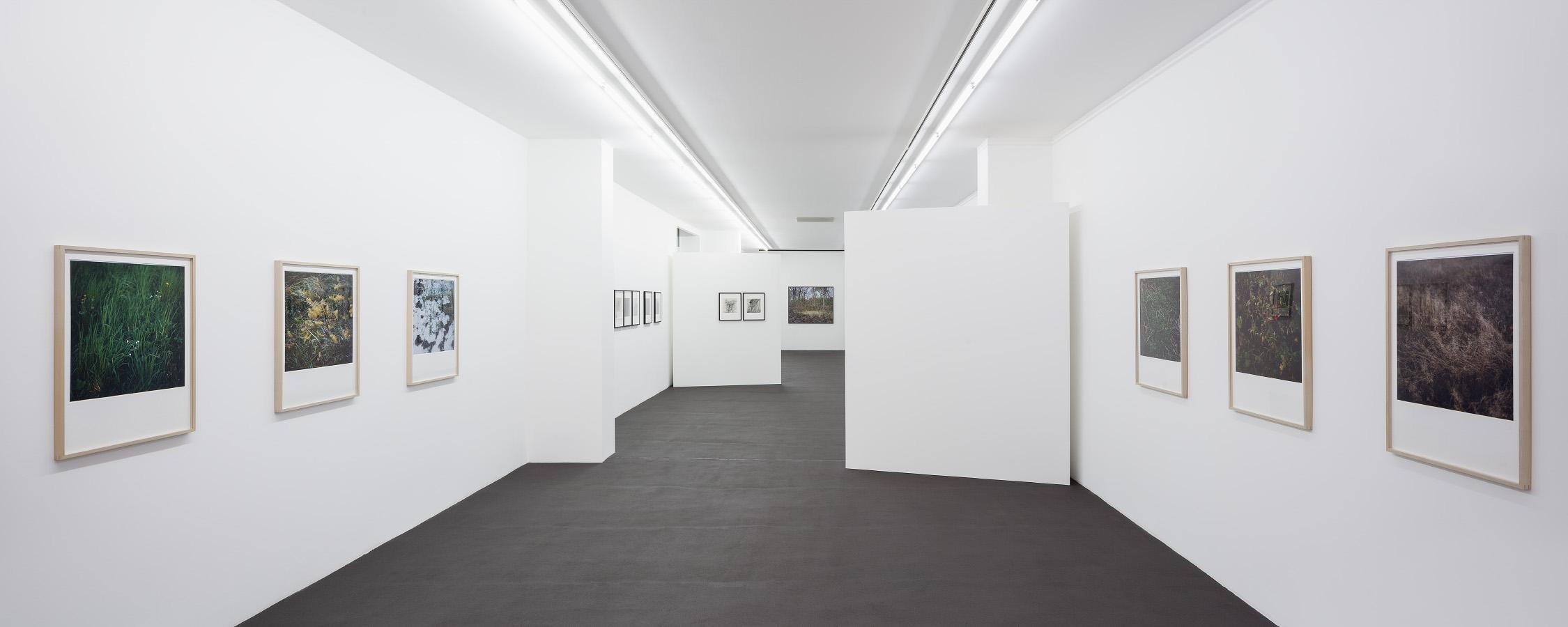Kehrer Berlin Galerie, Ausstellung Lob der Wildnis | Serial Landscapes, 7. Februar bis 29. März 2015. © Foto: Henning Rogge.