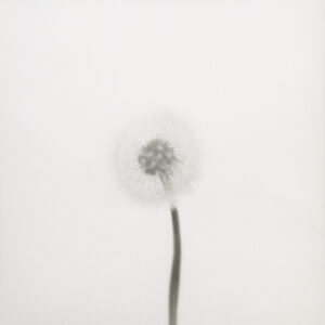 © Arno Schidlowski, Der Sonne Mond #27, 2011–2013. Barytprint, 27 x 27 cm. Courtesy Galerie Jo van de Loo und Kehrer Berlin Galerie.