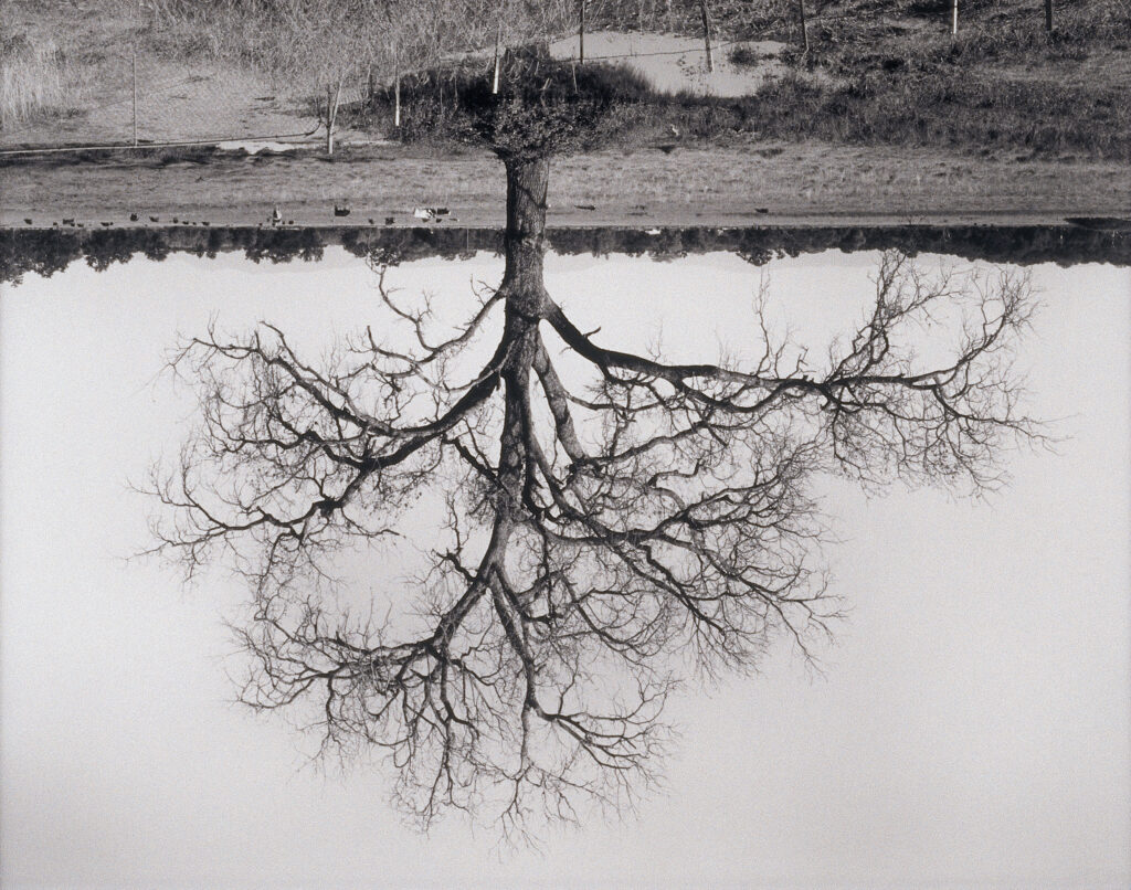 Rodney Graham  Oak Trees, Red Bluff (2), 1993 - 2000