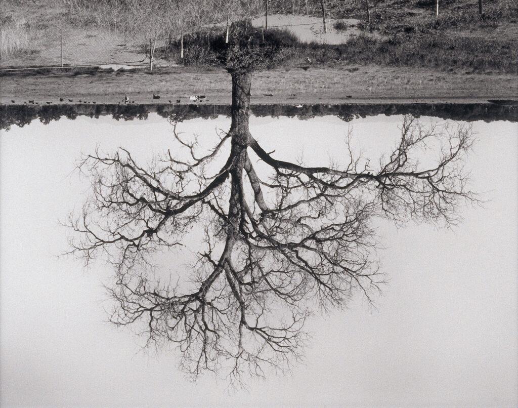 Rodney Graham  Oak Trees, Red Bluff (2), 1993 - 2000