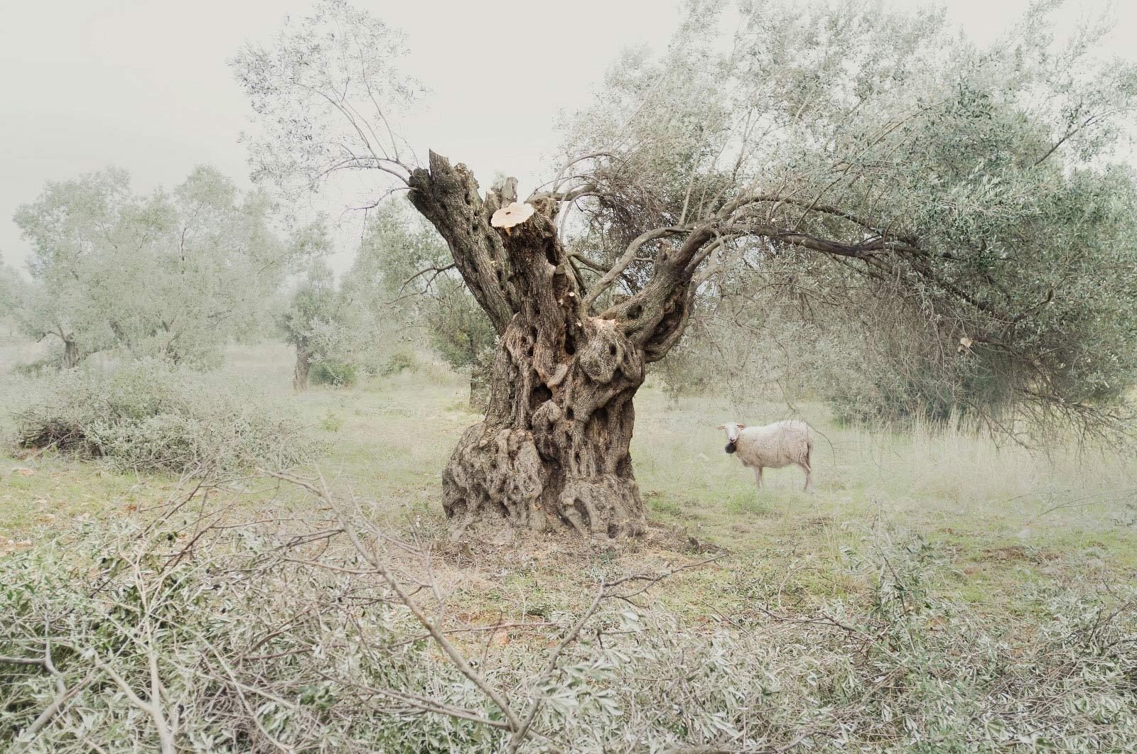 © Petros Koublis