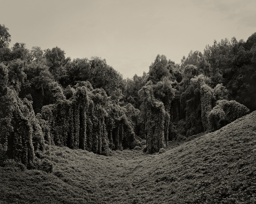 Helene-Schmitz-Kudzu-Project-Alabama-Fields