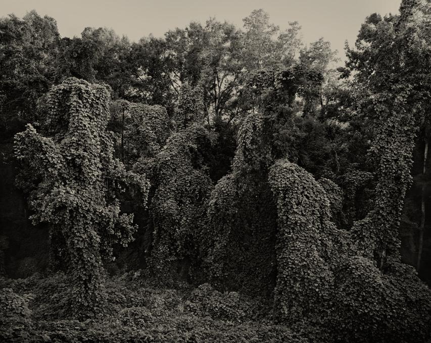 Helene-Schmitz-Kudzu-Project-Southern-Landscape