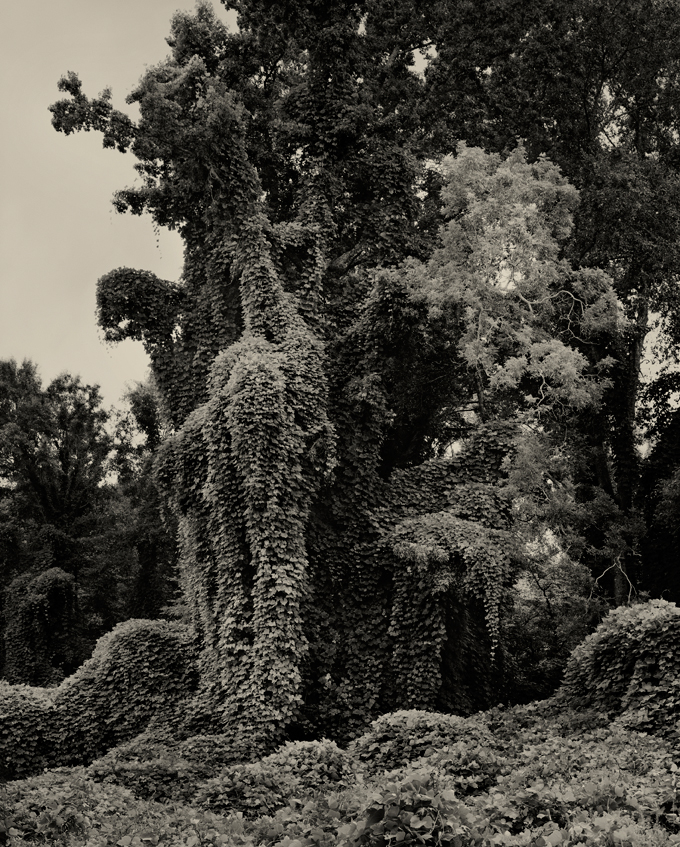 Helene-Schmitz-Kudzu-Project-The-Gothic-Tree