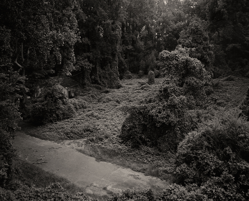 Helene-Schmitz-Kudzu-Project-The-Road