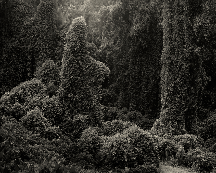 Helene-Schmitz-Kudzu-Project-Untitled