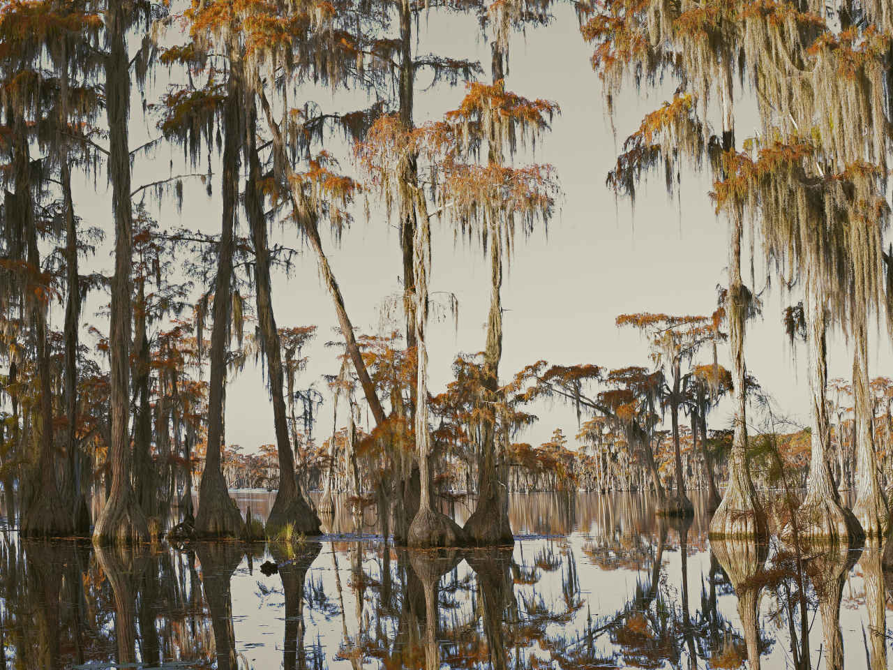 Pierre Gonnord, Swamp IV - The South Edition