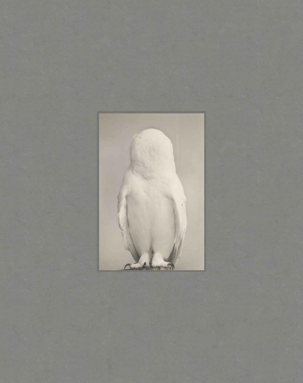 Masao Yamamoto, Tori  - The South Edition