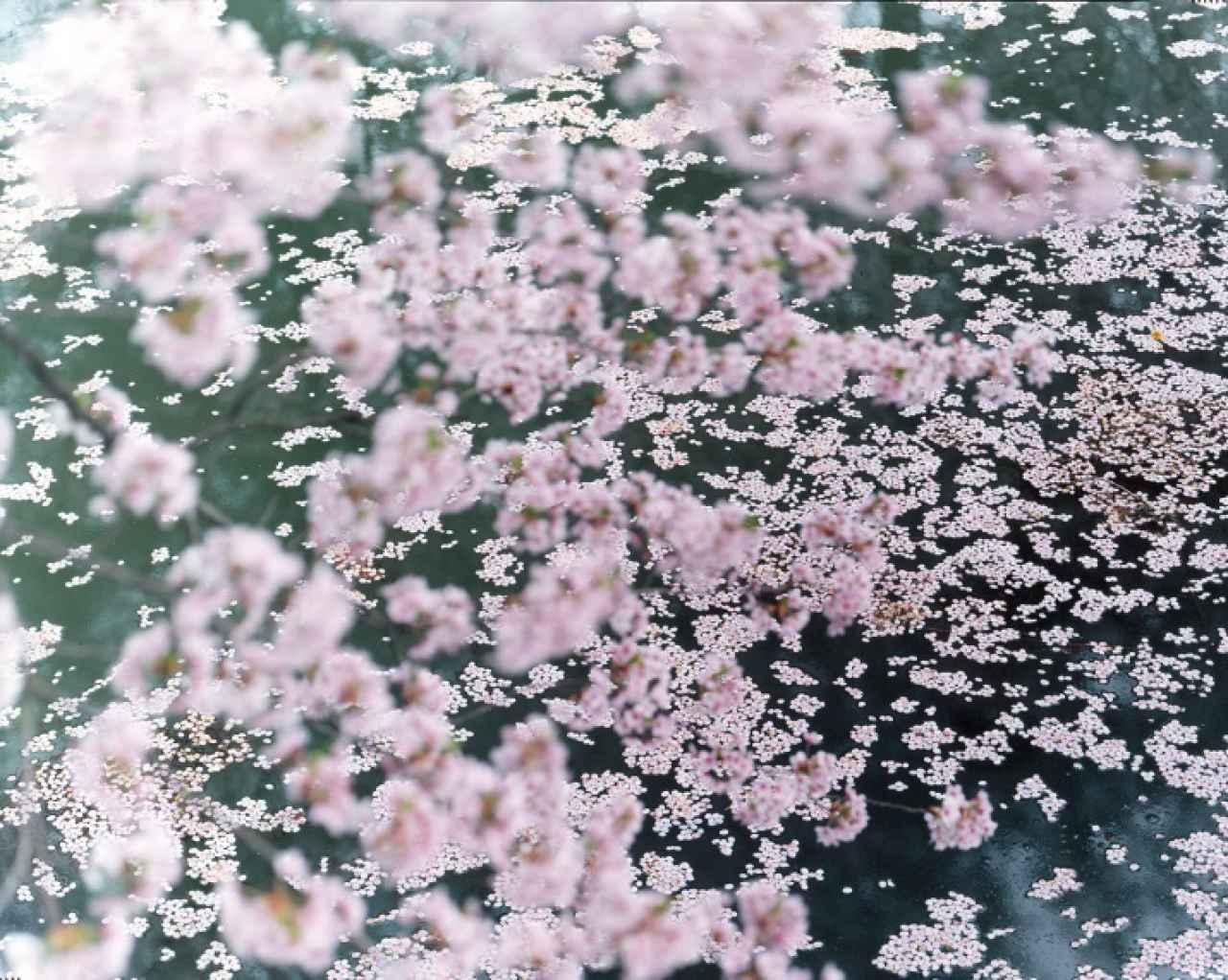 Risaku Suzuki, SAKURA 16,4-11 - The South Edition
