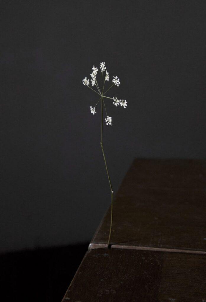 2D Flower, 2016, Elspeth Diederix/Stigter van Doesburg
