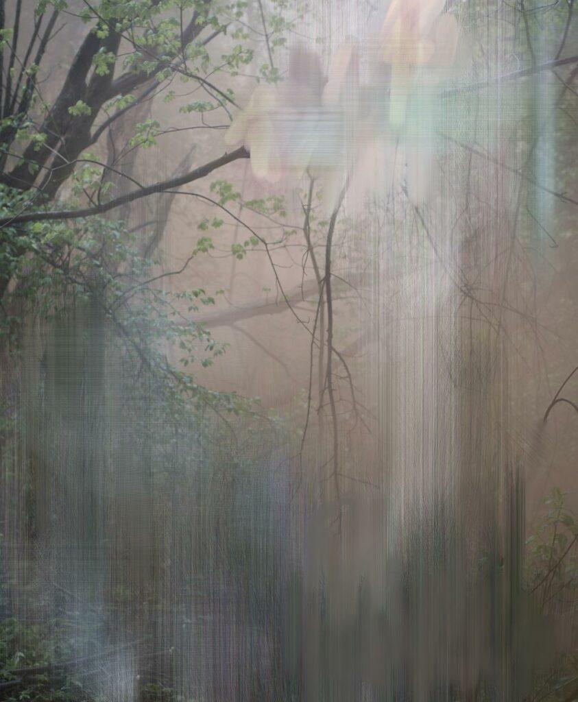 #6, from the series Forest, 2017, Sandra Kantanen